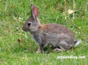 Challenges And Prospects Of Rabbit Farming In Nigeria